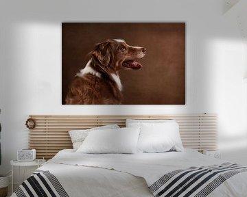 Australian Shepherd sur Jana Behr