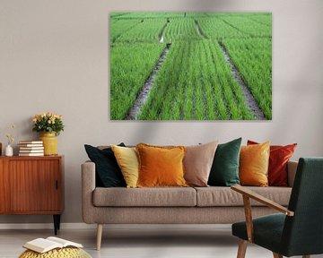 Javanesisches Reisfeldmuster von Martijn Stoppels