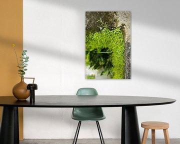Groene muur van Martijn Stoppels