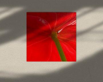 Rote Blume mit Stiel von René Roos