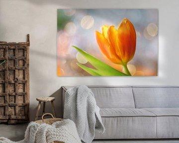 Tulp met vrolijke achtergrond van Cocky Anderson