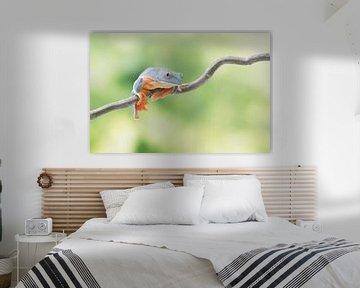 Blue Kermit... von Joyce Beukenex
