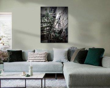 Birke in der Mauer von Andrea Meister