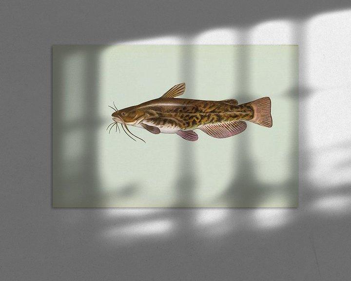 Sfeerimpressie: Bruine dwergmeerval (Brown bullhead fish) van Fish and Wildlife