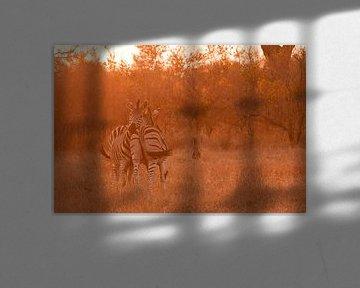 Zebras bij zonsondergang von Lotje Hondius