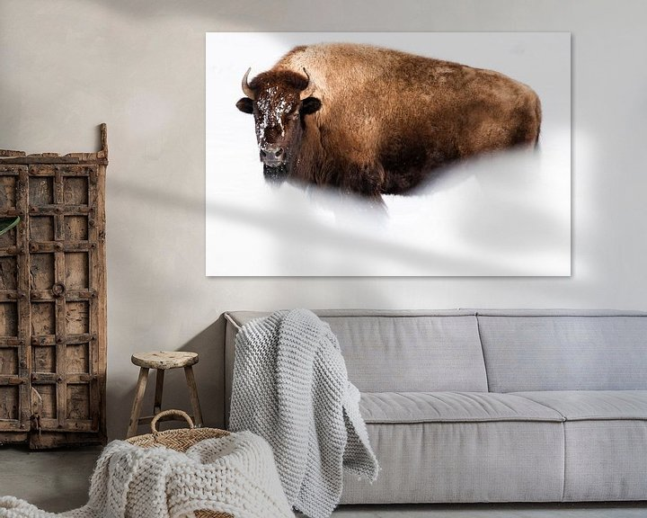 Sfeerimpressie: Amerikaanse bizon van Caroline Piek