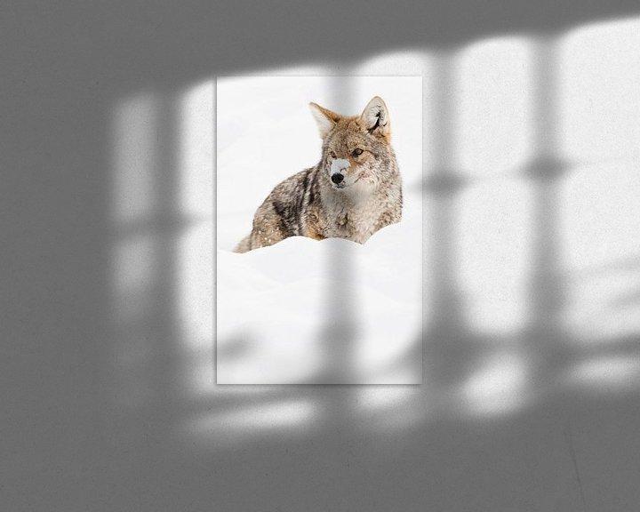Sfeerimpressie: Prairiewolf in Yellowstone Nationaal Park van Caroline Piek