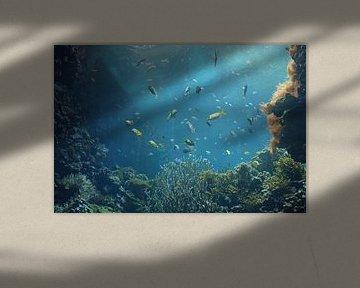 Onderwater wereld 8 van Carin Klabbers