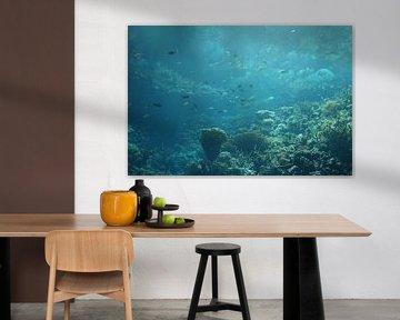 Onderwater wereld 11 van Carin Klabbers