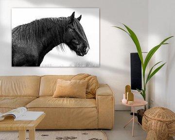 Zwart tinker paard von Lina Heirwegh