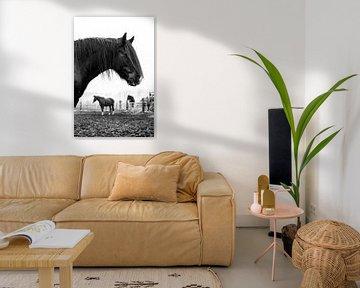 Zwart tinker paard 3 von Lina Heirwegh