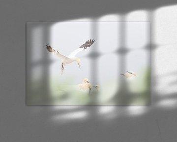 Jan Van Gent Vliegend von Ingrid Van Damme fotografie