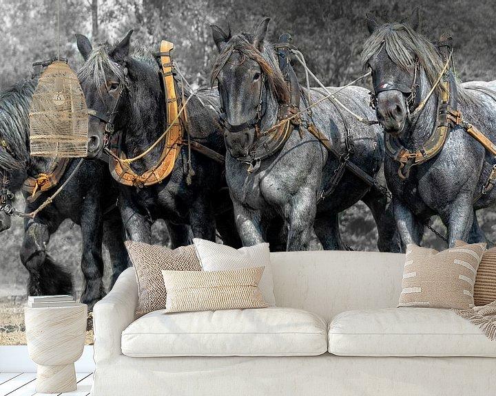 Sfeerimpressie behang: Zeeuwse trek-ploeg paarden van Carina Dumais