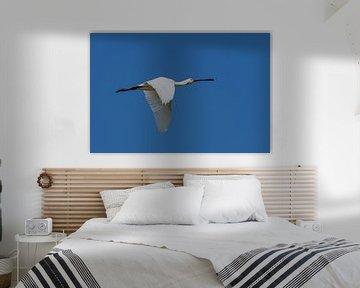 Hoog Wit ( Lepelaar ) van Andrea de Vries