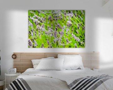 Lavender von Xylia Wairy