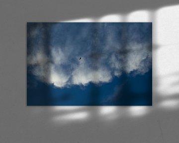 Roofvogel hoog in de lucht van Martijn Stoppels
