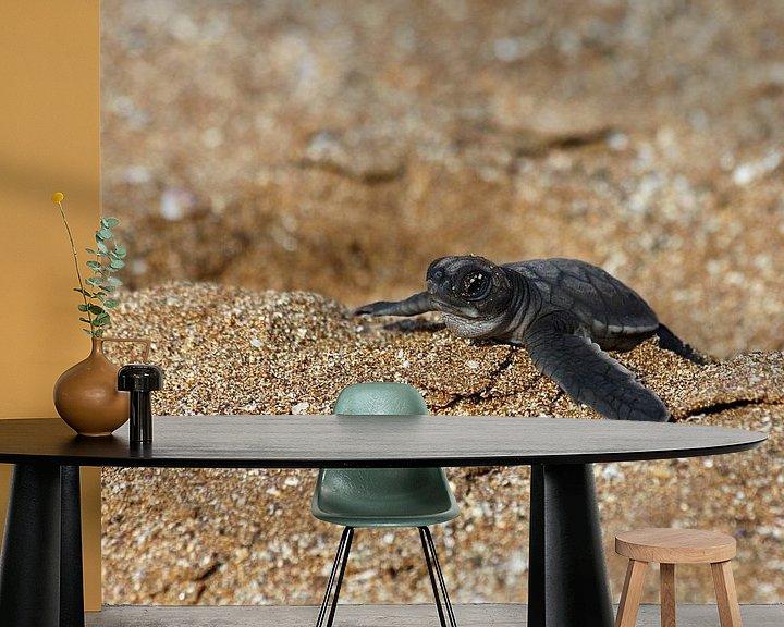 Sfeerimpressie behang: Babyschildpad van Antwan Janssen