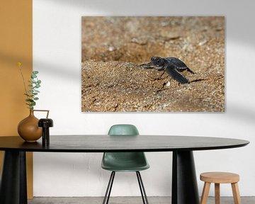 Babyschildpad van Antwan Janssen