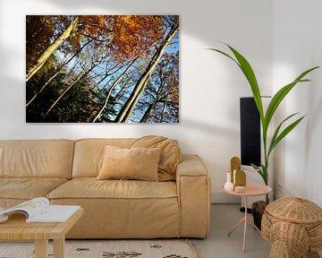 Herbst im 'Land van Ooit' von Monique Pulles
