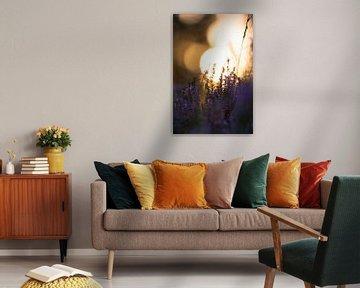 Untergehende Sonne mit lila Heidekraut