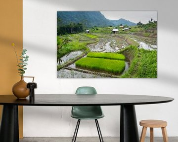 Neue Reispflanzen von Martijn Stoppels