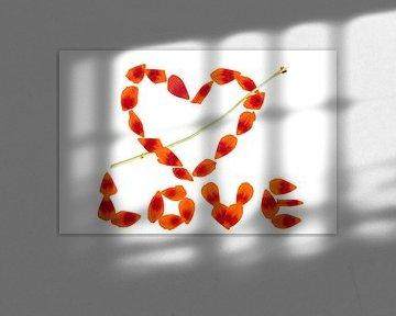 Tulp LOVE
