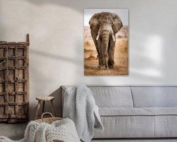 The Big Elephant, South Africa van W. Woyke