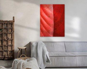 Structuur blad rood natuur herfst  van Samantha Enoob
