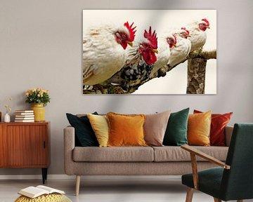 Met de kippen op stok!