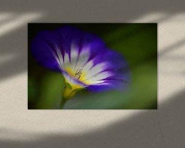 een klein kunstzinnig paars zomerbloemetje