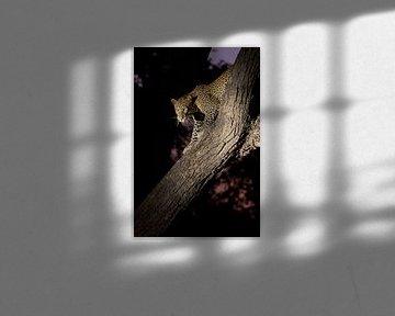 Luipaard in een boom van Dirk-Jan Steehouwer