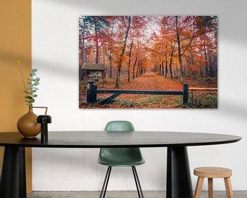 Orange forest...