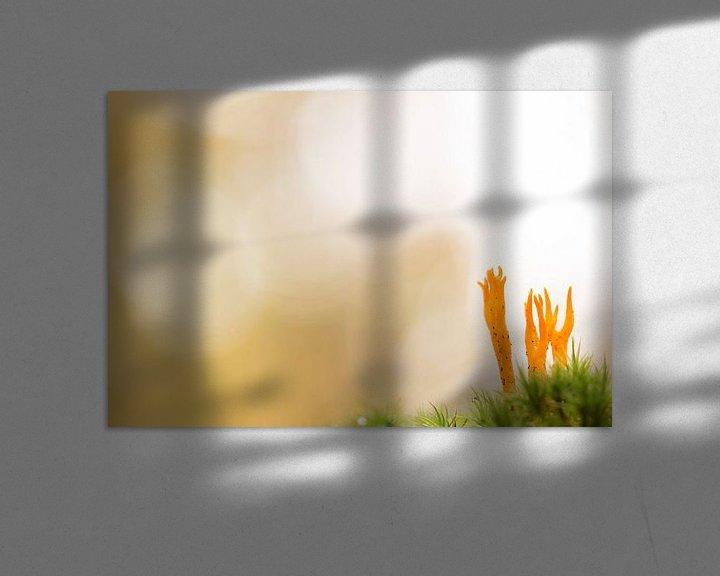 Sfeerimpressie: orange van Maja Ooms