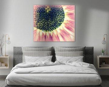 Sonnenblume von Annabella Rharbaoui