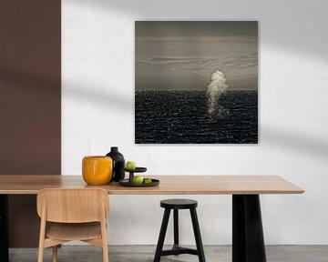 Blauwe vinvis voor de kust van Spitsbergen van Dirk-Jan Steehouwer