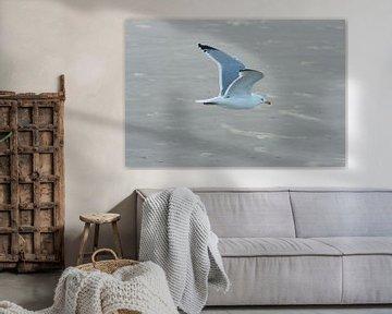 Vliegende meeuw sur Yorrit v.d.Kaa