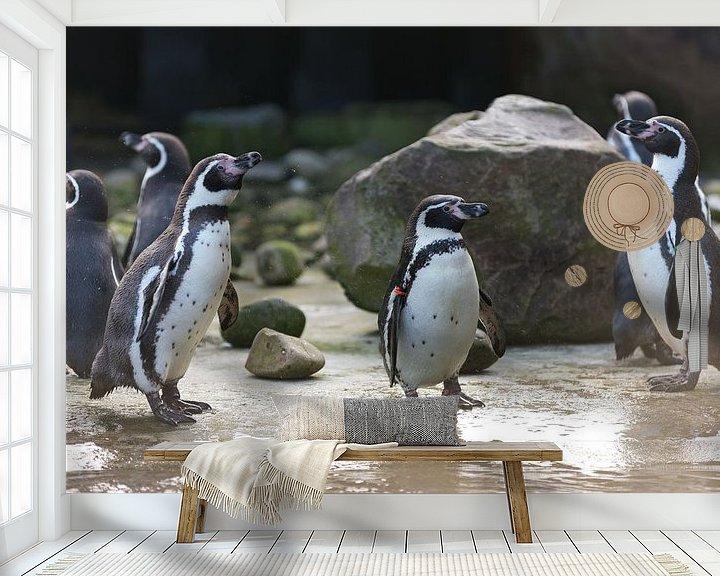 Impression: Humboldt Pinguïns sur Yorrit v.d.Kaa
