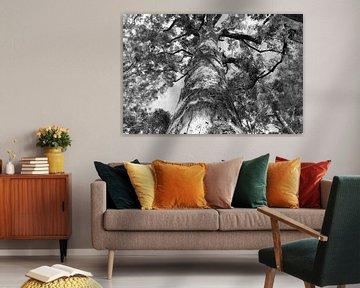 Baum in Schwarz Weiss von Ingrid Meuleman