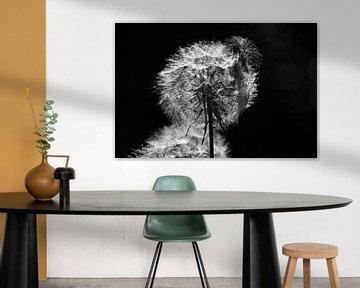Pluis, paardenbloem in zwart-wit von Ingrid Meuleman
