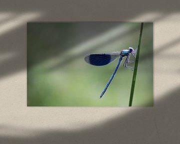 Nature's blues von Joyce Beukenex