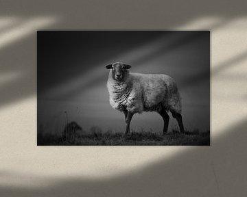 One sheep in the heather von Luis Boullosa