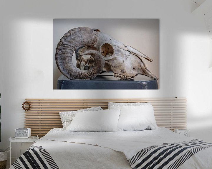 Beispiel: Rams schedel von Ron Meijer Photo-Art