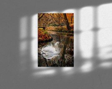Zwaan en herfst