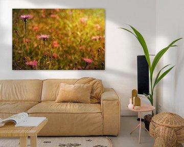Kornblumen  im Sonnenlicht von zwergl 0611