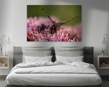 Makro eines Schmetterlings von Marloes van Pareren