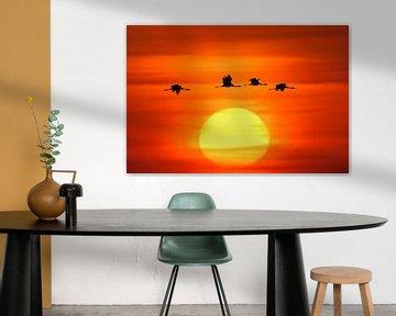 Common Cranes flying in front of a beautiful sunrise van wunderbare Erde