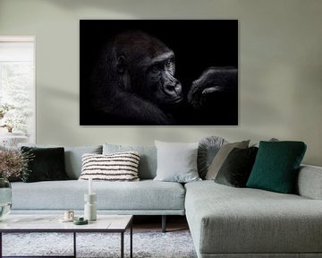 The young gorilla with the beautiful eyes von Ron Meijer Photo-Art