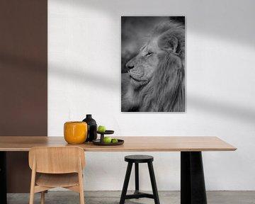 Lion in black and white von Ron Meijer Photo-Art