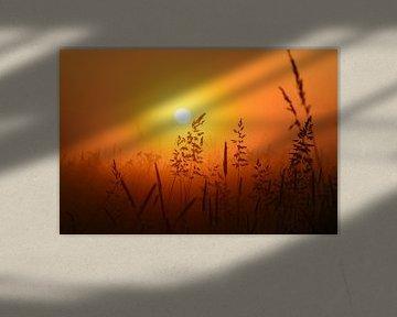 Weiland bij zonsopkomst von Maurice Kruk