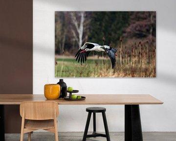 Stork in flight - Nr. 4 van Ursula Di Chito